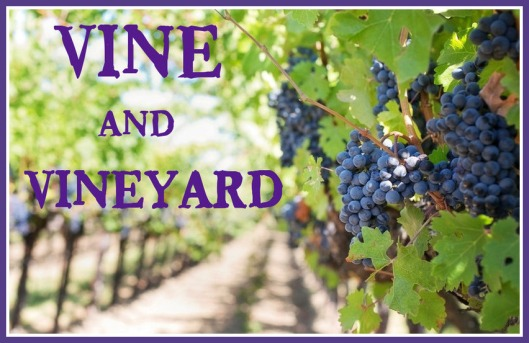 Vine & Vineyard